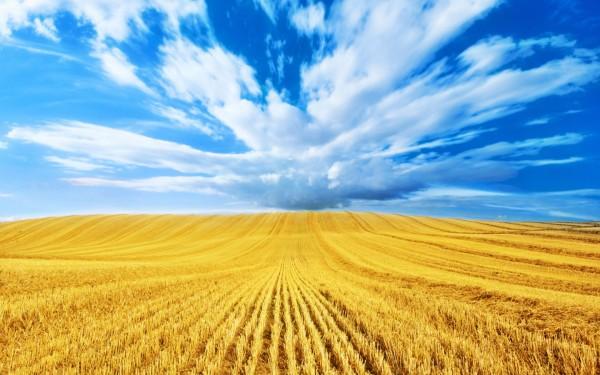 Голубое небо и золотые поля