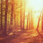 Осенний лес в лучах солнца